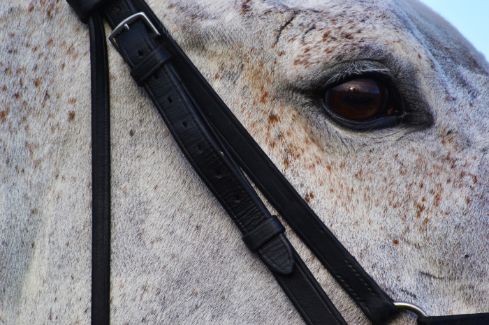 6 horse eye