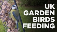 Garden-birds-feeding-thumbnail