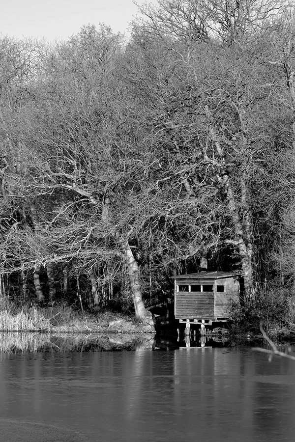 Warley Woods Winter 1