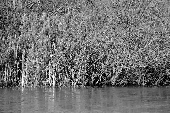 Warley Woods Winter 2