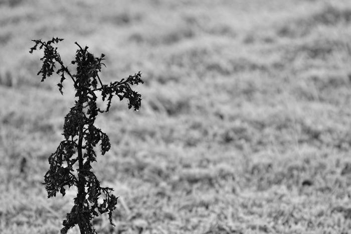 Warley Woods Winter 3